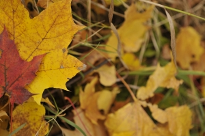 autumn-colours-5-1407344-m